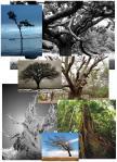 Inspiration - trees